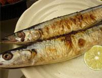ガゼラ 秋刀魚