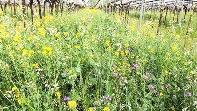 除草剤を使用しない自然の力をいかした畑