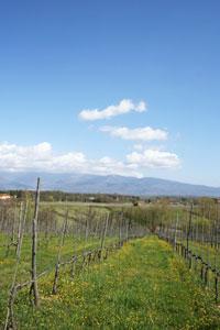 ペトローロの畑