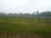 シャトー・ル・グラン・ヴェルデュ グラン・リゼルヴ 2009 畑