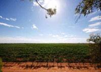 アンゴーヴス オーストラリアの畑