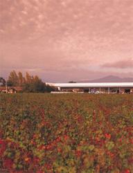 アレスティ 畑風景